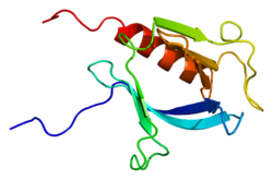 Protein PLEKHB2 PDB 2dhi.png