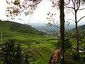 Puncak panoramic - panoramio.jpg