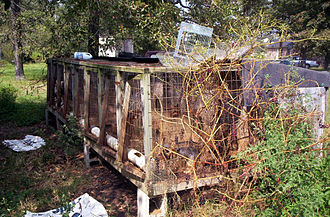 Puppy mill - A puppy mill in the rural United States