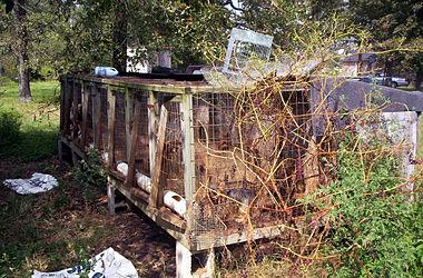 Ark Dog Rescue Calgary