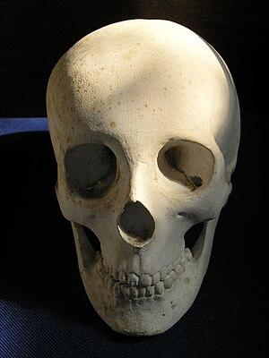 Berengaria of Portugal - Image: Queen berengaria skull 1221ad