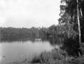 Queensland State Archives 1272 Lake Barrine near Yungaburra c 1935.png