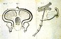 R. Lower, Tractatus de Corde, 1669 Wellcome L0020413.jpg