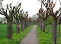 Ravel lijn127 - panoramio.jpg