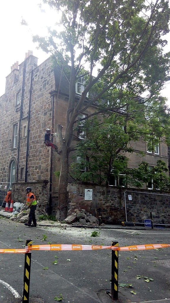 Tree Trimming Takes Competence Also Sense To Execute Effectively 576px-Rear_of_16_George_Square_tree_removal(2)
