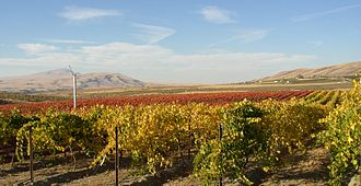 Red Mountain (Washington) - Kiona Vineyard looking northwest. Red Mountain to the right, the Yakima River gap in the middle and Rattlesnake Mountain to the left.