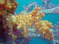 Reef0898 - Flickr - NOAA Photo Library.jpg