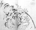 Rheede Tot Draakestein, H. A. Hortus Indicu. Wellcome L0027423.jpg