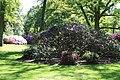 Rhododendronpark Bremen 20090513 159.JPG