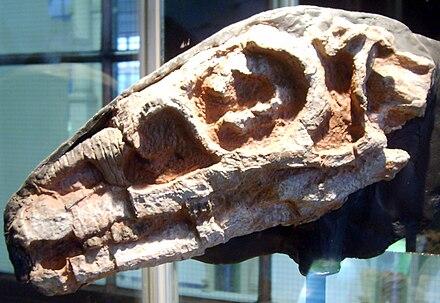 Riojasaurus