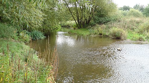 River Roding in Roding Valley Meadows 1