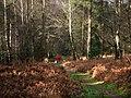 Rogate Common - geograph.org.uk - 1136054.jpg