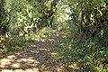 Roman Road, Little Storeton 3.jpg