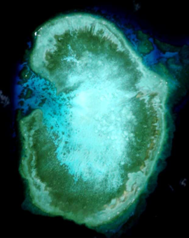 Ross Reef.png
