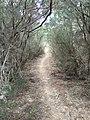 Ruta NAYL 1 - panoramio.jpg