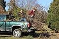 SB VSCC boxwood restoration at Mulberry Hill (16148811721).jpg