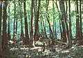 SC Congaree Swamp River.jpg