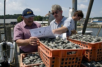 Food safety - FDA official and New Jersey state inspector review harvest of clams