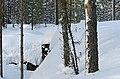 Salpa-line Finland - panoramio.jpg