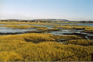 Chichester Harbour - Salt-marsh near Bosham