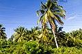 Samaná Province, Dominican Republic - panoramio (42).jpg