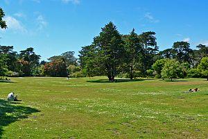 Lawn - San Francisco Botanical Garden lawn
