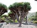 Santa Brigida, Canarias, España - panoramio (3).jpg
