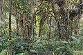 Santa Elena Reserve.jpg