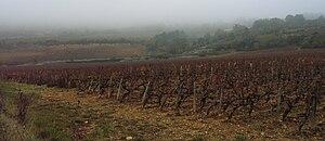 Santenay wine - A Santenay vineyard in autumn.