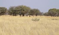 Savannah near Kuruman