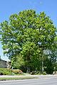 Schleswig-Holstein, Borstel-Hohenraden, Naturdenkmal 36-04 NIK 3340.JPG