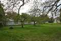 Schlosspark Leesdorf I.png