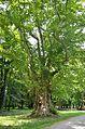 Schlosspark Pottendorf - tree.jpg