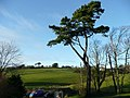 Scots pine and view from Lenwood - geograph.org.uk - 661440.jpg