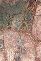 Scyphocrinites elegans Zenker, 1833 7100.5010 (250 mm).jpg