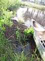 Seney National Wildlife Refuge (7263091298).jpg
