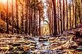Sentieri tra le foreste casentinesi.jpg