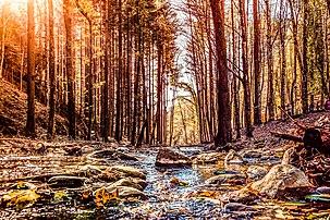 Sentieri tra le foreste casentinesi