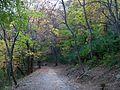 Sentiero nel Parco Cittadino,Bosco Farnetto - panoramio.jpg
