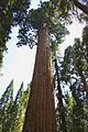 Sequoia National Park 02.jpg