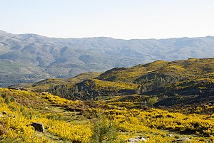 Peneda-Gerês National Park - A view of the yellowish landscape of the Serra Amarela (Yellow Serra)