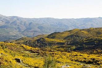 Peneda-Gerês National Park - A view of the yellowish landscape of the Serra Amarela (Yellow Serra)