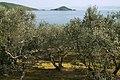 Shodoshima Olive Park Shodo Island Japan23bs34.jpg