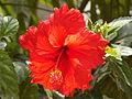 Shoeflower Mumbai.JPG