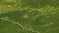 Siberiaweek25 - Green earth.png