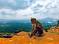 Sigiriya Rock monkeys 2.jpg