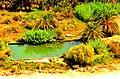 Siwa Oasis, Qesm Siwah, Matrouh Governorate, Egypt - panoramio (10).jpg