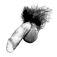 Scientific illustration of a flaccid, circumcised penis, with pubic hair and testicles visible