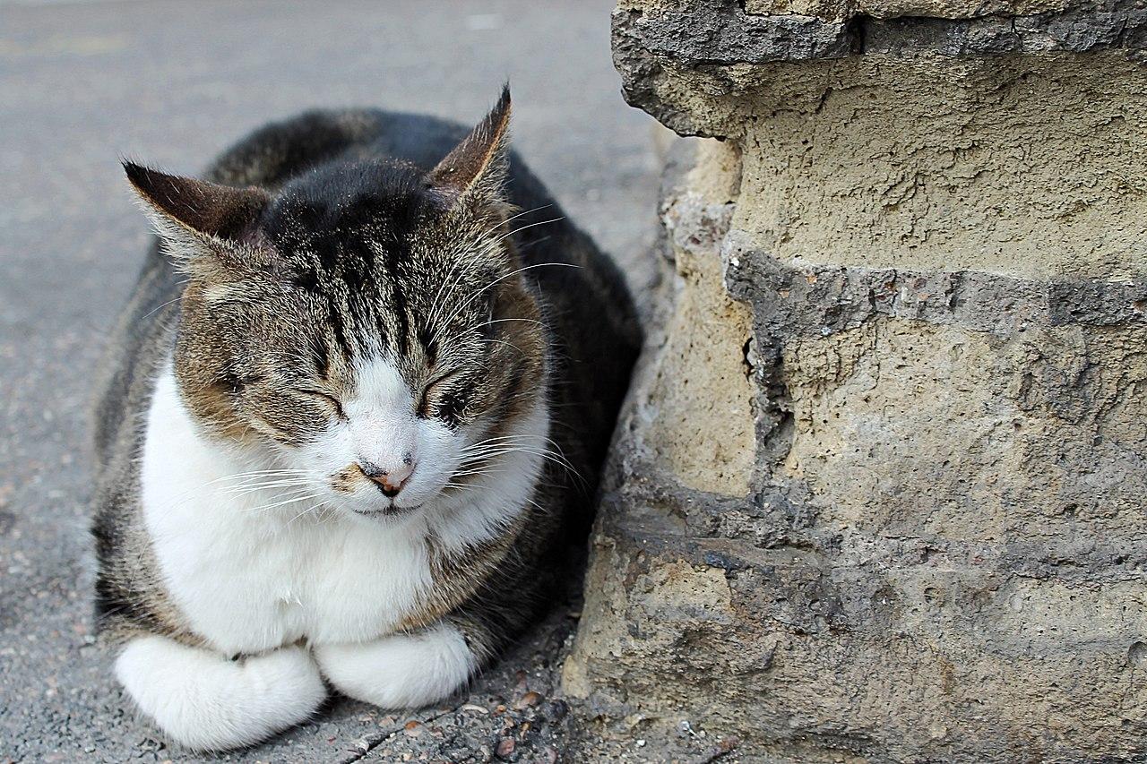 Cat Sanctuary For Sale