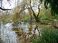Small Lake - panoramio (1).jpg